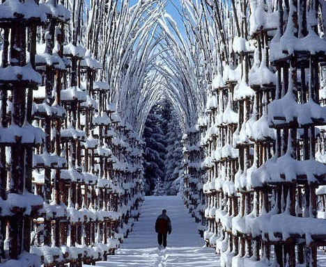 landscapelifescape:   Malga Costa Tree Cathedral, Val de Sella, Italy artwork by Giuliano Mauri  Arte Sella
