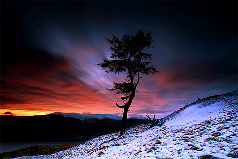 tr4nscending:  Larch Tree Dawn Loch Tay By angus clyne