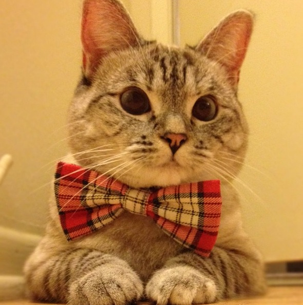 Cats. And bowties. I'm off to raid the animal shelter.