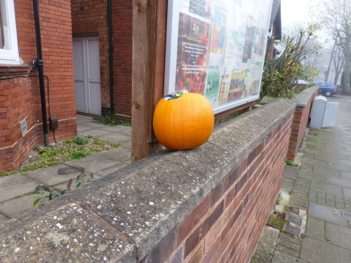 November 15th - Have you found yourself short of your pumpkin? If so, yesterday at 9:00am, it was taking a breather on the wall outside the Baptist Church Hall in Acocks Green, Birmingham. Untouched, in perfect condition, this lonely gourd made an odd sight on the way to work…
