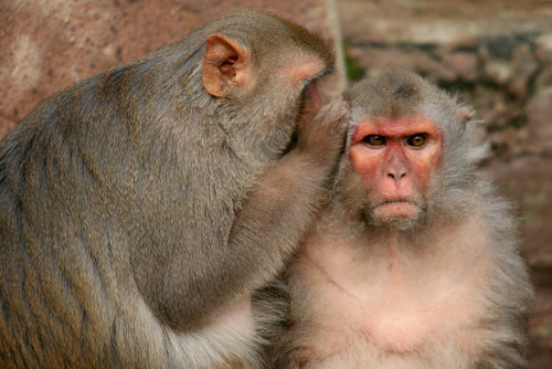 (via scinerds) Animals Are Moral Creatures, Scientist Argues Until recently, scientists would have said your cat was snuggling up to you only as a means to get tasty treats. But many animals have a moral compass, and feel emotions such as love, grief, outrage and empathy, a new book argues.