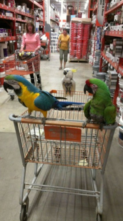 Bird Shopping at Home Depot These bird houses aren't going to just build themselves.