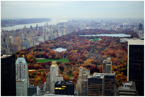 ernesthon:  Autumn Leaves in Central Park - the view from the Top of Rockefeller Center November, 2011