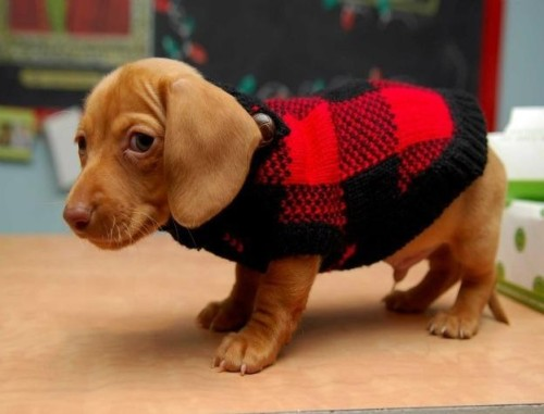 Don't be sad, little guy, you have a great sweater vest!
