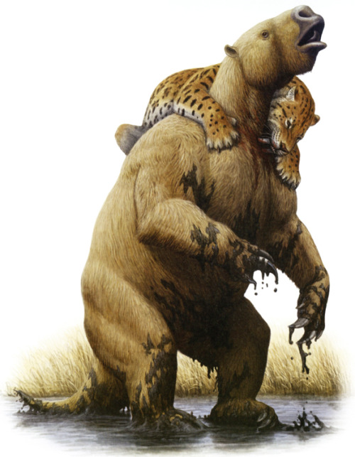 "paleoillustration:  ""Bad day at the tar pits, as a sabre-toothed cat (Smilodon) attacks an already entrapped giant ground sloth, Paramylodon"". By Mauricio Antón."
