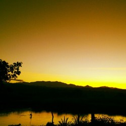 onyxlouise:  Breaking dawn. Frontyard view of sunrise. Orange and yellow hue with vanishing darkness. #home #sunrise #breakingdawn #morning #yellow #orange #majestic #photography #earlybird