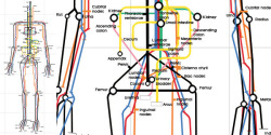 The Human Body as a Subway Map. Sam Loman created this original illustration of the inner workings of the human body using the underground map as a point of reference. Also check out Sam's animals on the underground illustrations.