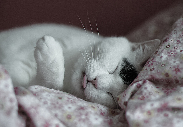 bigcatface:  untitled by __AK__ on Flickr.