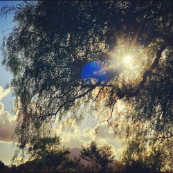 The Willow #tree #nature #sun #sunset #blue #sky #cloud #leaf #mountain #park #grow #instagood #igdaily #iphone #iphone5 #nice #branch #beautiful #growth #photooftheday #hdr #nofilter