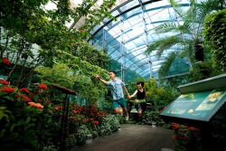 This is the enchanted butterfly garden in Changi Airport. Come away with us to a secret garden.