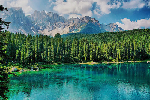 woodendreams:  (by luciano dionisi)