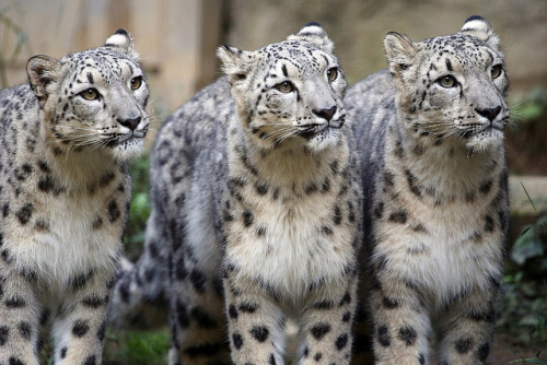 tigersandcompany:  Kiddies (by Steve Tracy Photography)