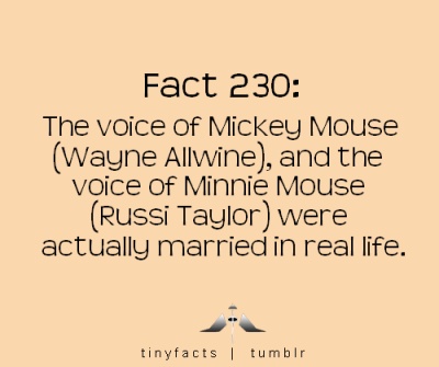 tinyfactss:  tinyfacts:  The voice of Mickey Mouse and the voice of Minnie Mouse were actually married in real life! Source  Oh, yeah as some of you may have noticed, I recreated this blog. Follow me here . I will be updating it almost every day with new facts. I also have a facebook here