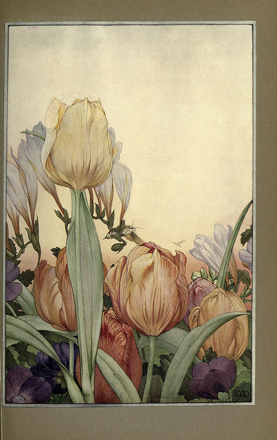n244_w1150 by BioDivLibrary on Flickr.Via Flickr: News of spring and other nature studies.. New YorkDodd, Mead1917.biodiversitylibrary.org/page/24189851