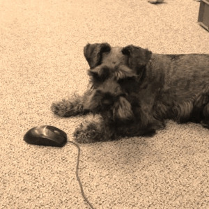 Tex catches a mouse.