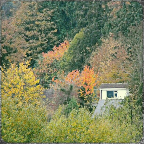 among the #trees … #house #window #white #foliage #autumn #fall #orange #NewtownPowys #Wales #poking #slope #forest #woods #beautiful #living #деревья #окно #дом #linandara_trees #linandara_built