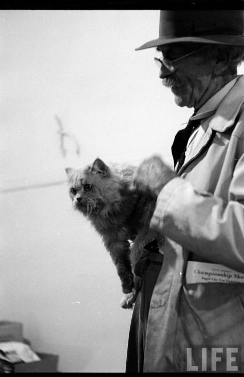 George Silk, Los Angeles cat show, 1952. Source: LIFE Photo Archive, hosted by Google.