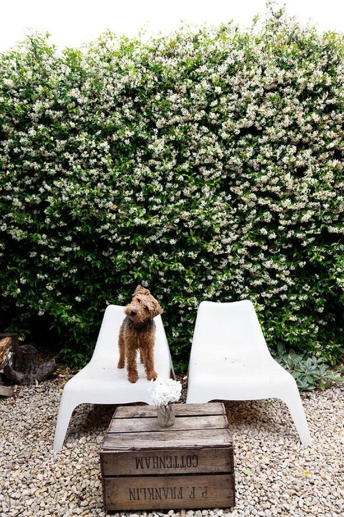 aetherelement:  Welsh Terrier - abigail ahern