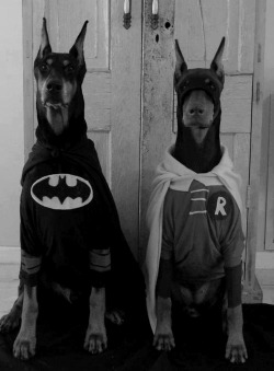 Jenny. I'll get a doberman and we can create this.