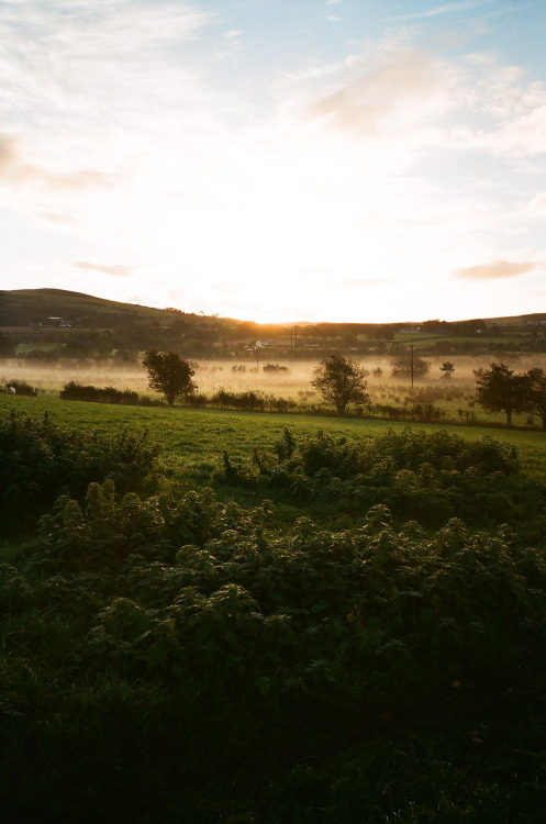 8am - looking out over my uncle's fields from my house in Ireland.