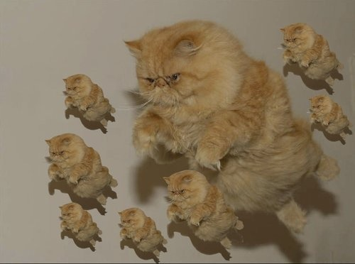 wa-chubble-is-dis:  Cats, take flight!