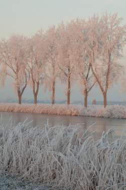 dirtygardens:  ethertune: Pink sunlight on frozen trees (By lkampherbeek)