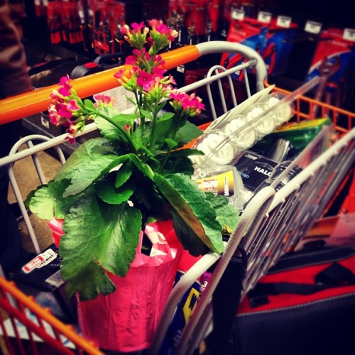 a flower grows in the tool cart (at Home Depot)