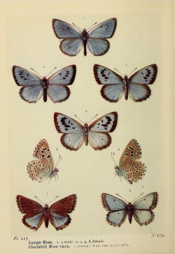 ayra:  The butterflies of the British Isles