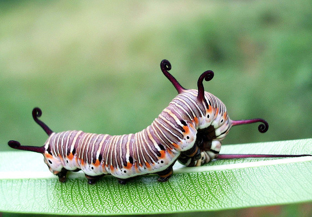 Caterpillars are beautiful too!