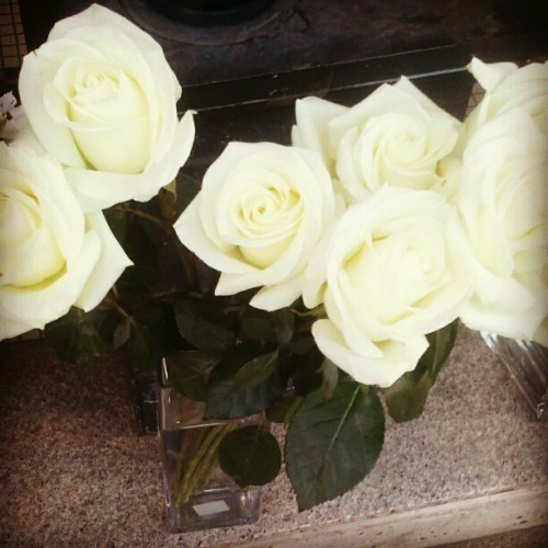 sagacontinues:  #white #roses or white tulips are my favorite #flowers… *hinthint haha