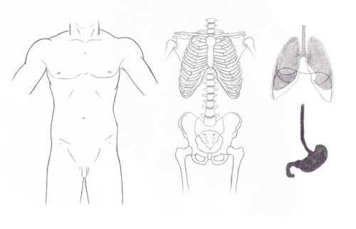 retwedt:  stomach and lungs (separate layers), graphite
