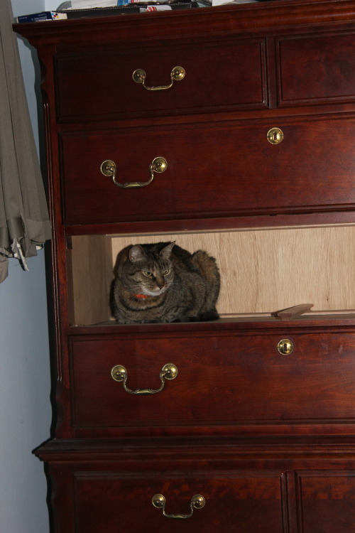 get out of there cat.  you are not a dresser drawer.  you do not make my apartment smell of rich mahogany.