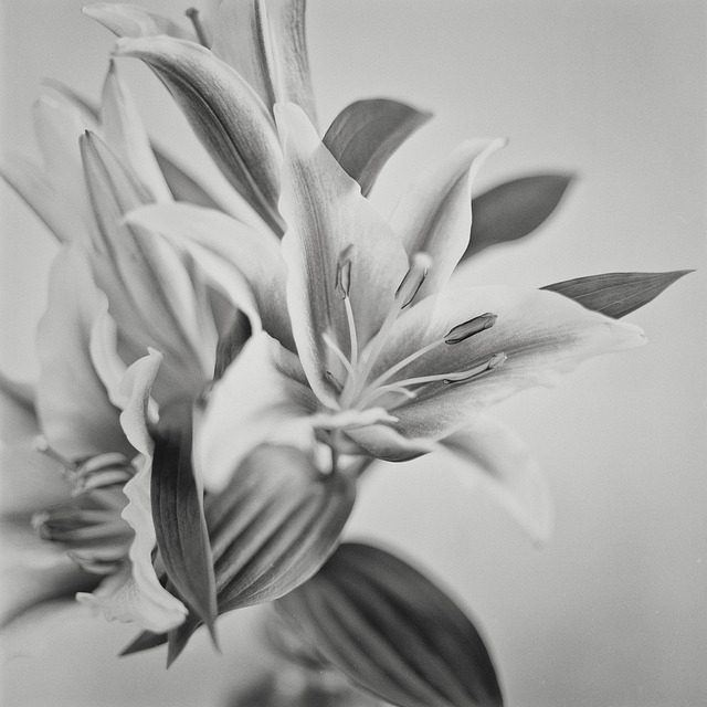 Monochrome Flower on Flickr.