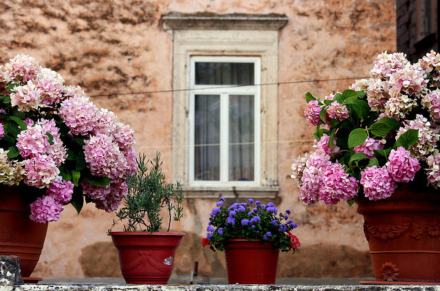 Flowers, Window & Wall on Flickr.