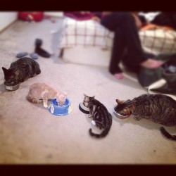 Kitty Brunch at daddy's house. #teddythekitty #sadiethekitty #ticothekitty #amethekitty
