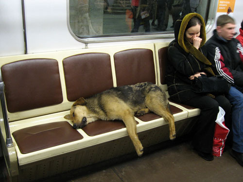 buddhabrot:   so many strays in russia and they all ride the metro during winter because they get cold  cries