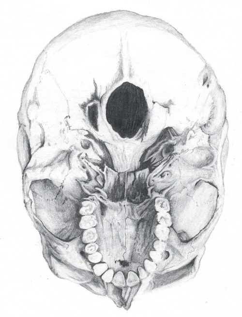 caseambe:  Foramen Magnum Found one of my unfinished drawings from last year. need to finish soon!