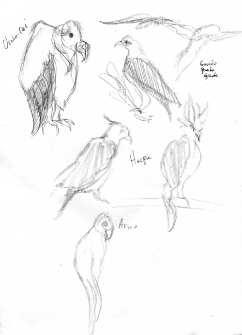 Zoo sketches.