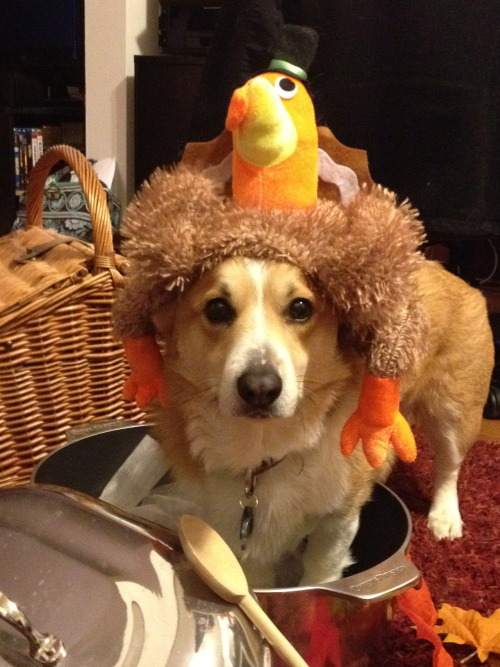 Jimbo, the corg-key, as Mr. Turkey. Happy Thanksgiving! Submitted by Steve & Ande