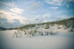 Dunes. Grayton Beach, Florida.