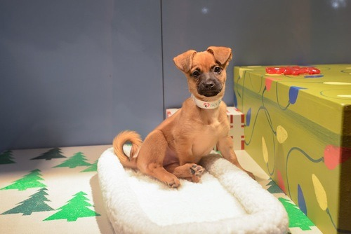 Have you been by the SF SPCA's holiday window display at Macy's Union Square yet? Why not? Look at who you're missing! At least check out the livestream. [photo via SF SPCA]