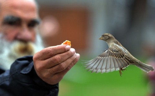 A man feeds a sparrow in the garden of the Prado museum in Madrid.  Picture: DOMINIQUE FAGET/AFP/Getty Images