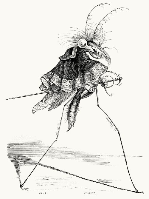 The misocampe Wasp.  J-J. Grandville, from Vie privée et publique des animaux (Public and Private Life of Animals), under the direction of P. J. Stahl, Paris, 1867.  (Source: archive.org)