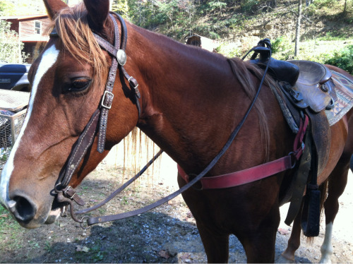 I cannot wait to move and finally have her with me and I can ride her all the time.  I really need to get new tack for her lol.