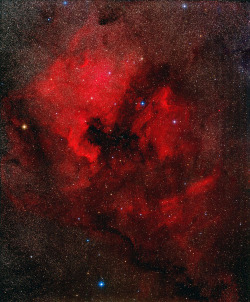 we-are-star-stuff:  This image shows the North America Nebula (NGC 7000) and the Pelican Nebula (IC 5070, 5067), two nebulae in the constellation Cygnus, approximately 1,700 light-years away. The remarkable shape of the North America nebula (left) resembles that of the continent of North America. To the right is the less luminous Pelican Nebula. The two emission nebulae measure about 50 light-years across and are separated by a dark absorption cloud. It is still unknown which star or stars ionize the red-glowing hydrogen gas.