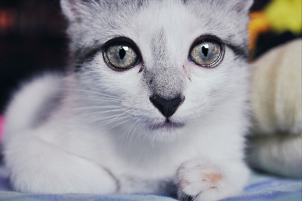photogenicfelines:  (NatashaNevermind)