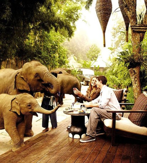 Four Seasons Tented Camp @ Golden Triangle(via Fancy)