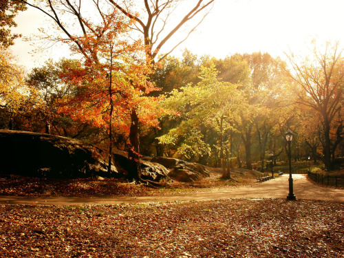 "Autumn light. Central Park, New York City  On this day last year, someone who I was close with in my early 20s died and I am still trying to make sense of such a tragic loss. I don't think I ever will. I made a a lengthy post about Jen and my memories of her (with videos of her amazing performances) here last year:  Jeniviva  A few days later, I wrote this poem and posted it with this photo I am posting right now. It was raw and it's the only thing I can think of posting today that sums up what I am (still) feeling:  It's in the way the sunlight streams through the last vestiges of autumn: as golden as the leaves that hold onto their branches.  It's in the way the earth bares itself under this fanfare: as vulnerable as new lover's heartbeats buried under layers of clothing.  Winter's prelude starts slowly: a distant refrain that works its way through the earth chilled in anticipation.  We slow-dance on this mortal coil to the adagio of life twisting and turning with the whims of the winds that scatter our spirit to the ends of the earth.  It's all we can do.   —-  View this photo larger and on black on my Google Plus page  —-  Buy ""Adagio - Light Through Autumn Trees - Central Park"" Prints here, email me, or ask for help."