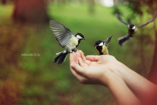 love-england:  not afraid of flying (by Sandy_Vdo)