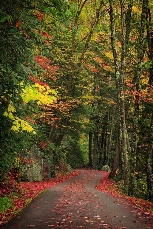 Forest Path, Smokey Mountains, Tennessee photo via zeynap